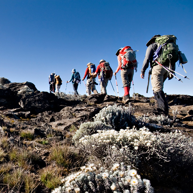 Medcan adventure group travels to Kilimanjaro as part of the Kickstart program