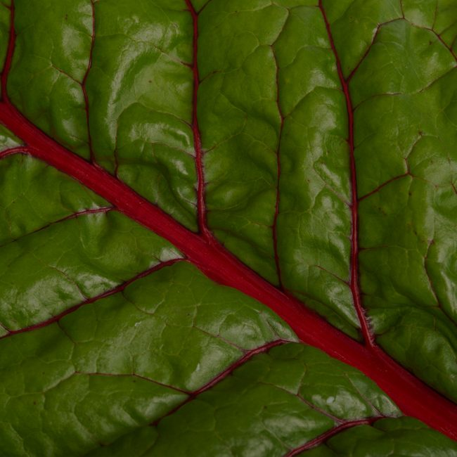 Close up of kale